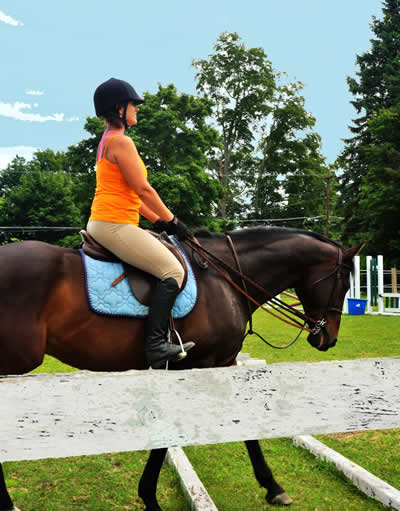 OTTB training and lessons at Turning Leaf Farm Lutz, Fl 508 481-1550