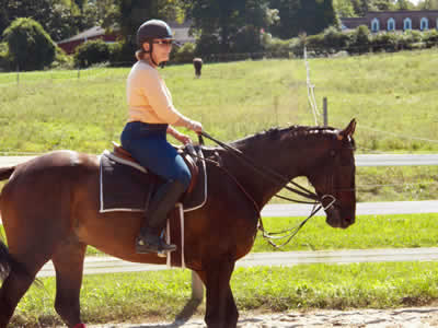 Horse leasing at Turning Leaf Farm, Lutz, Tampa Fl, 33558